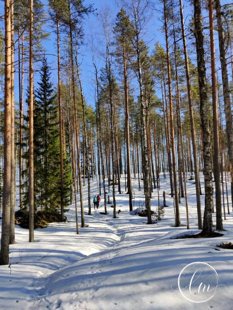 Metsä_Tiilikka (1)