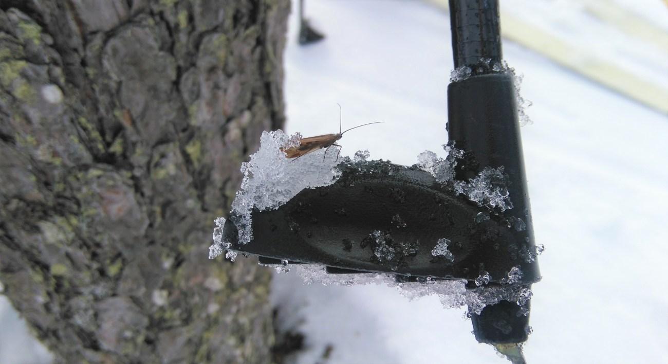 miten ötökkä pärjää talvella