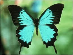 aquabutterfly