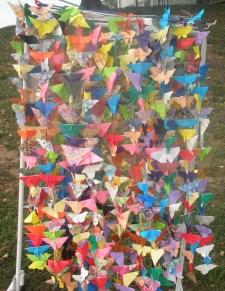 600-butterflies