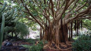 Tree with large roots
