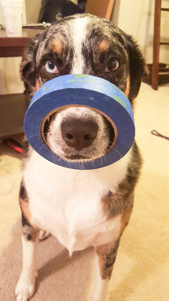 kate balancing tape on her nose.