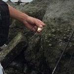 産まれて初めて釣ったシーバスは74cm!ポイントは熊本県緑川河口でした