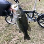 【自転車×釣り=釣れる】インプレ!なぜこんな簡単な事に今まで気付かなかったんだ、、、。