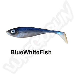 blue-whitefish