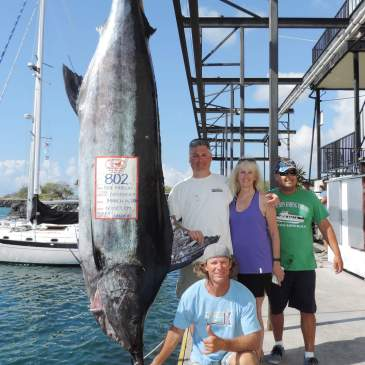 Biggest marlin to date, ono, sailfish and kawakawa