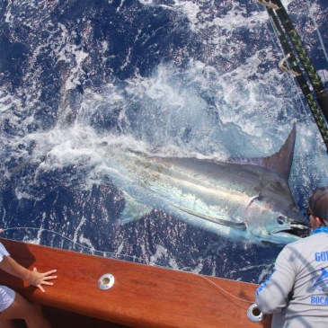 Double black marlin attack