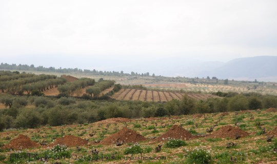 vineyards of Sierra Salinas