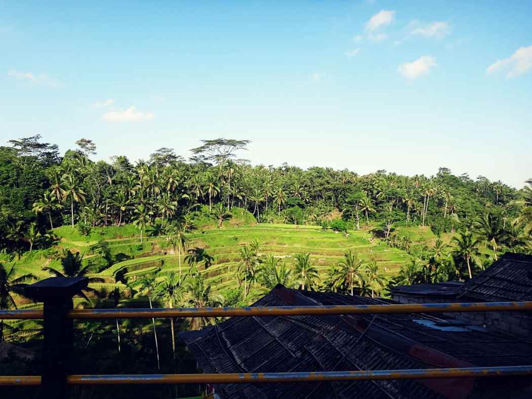 Best Things To Do in Ubud | Rice Terrace