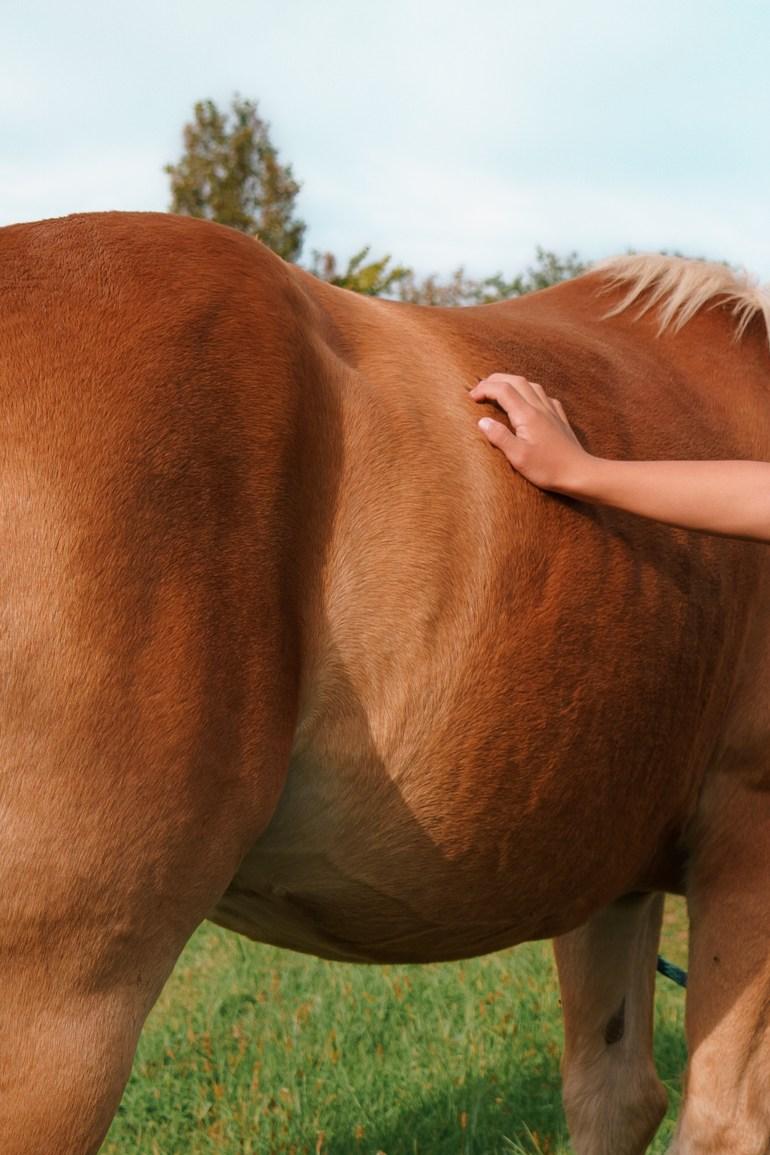 horse at WindReach Farm
