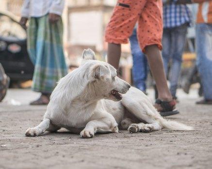 Luso–Life_mumbai-11