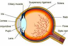 Eye Health Tips, Top 5 Best Eye Health Tips to Save Your Vision for a Longtime