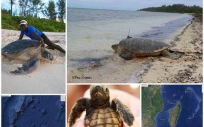 Des élèves bisontins suivent la trace de cinq tortues… à Madagascar !