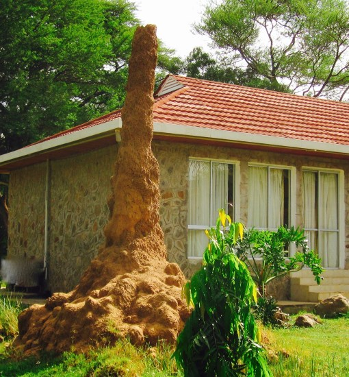 No. That's not the Kenyan equivalent of a plastic flamingo lawn ornament. That's a termite hill