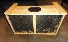 bees2-web