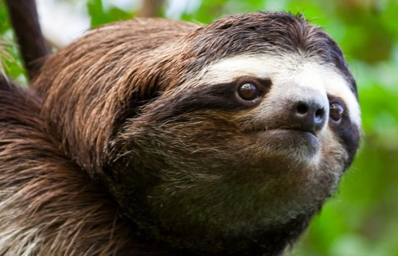 sloth galau picture