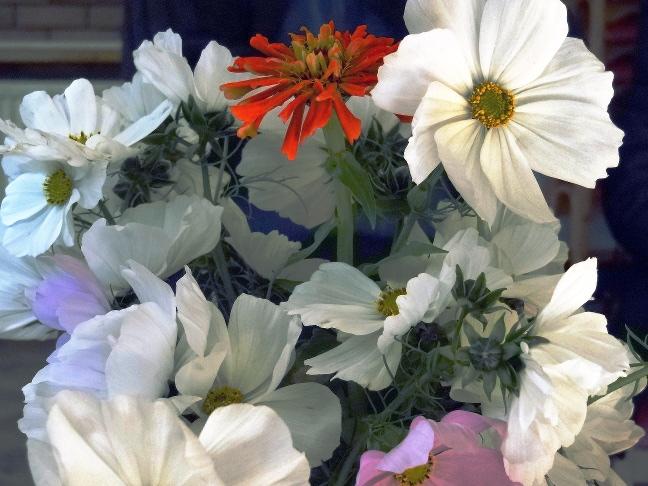 Flowers 27 Oct 2013