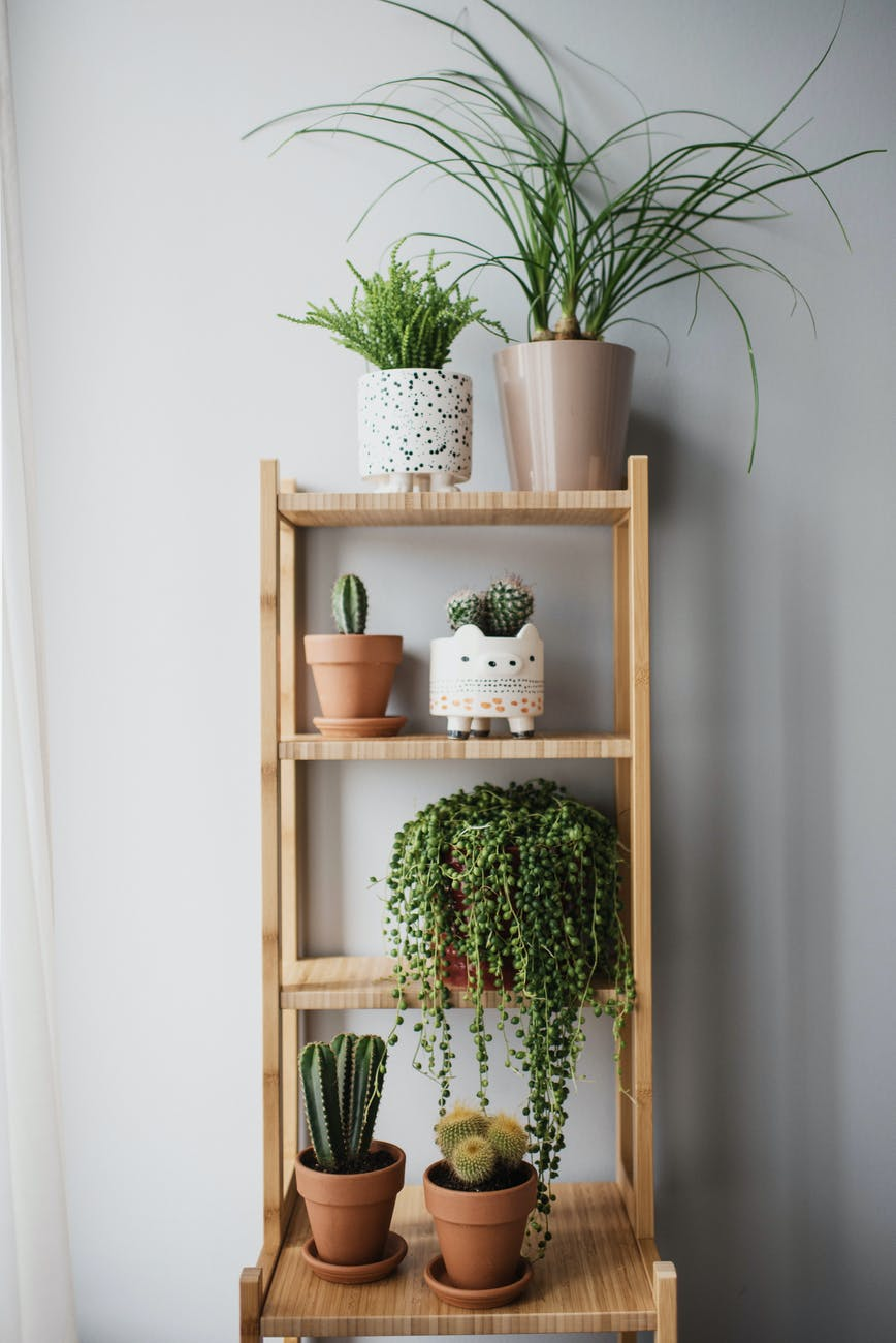 green plants on brown wooden shelf