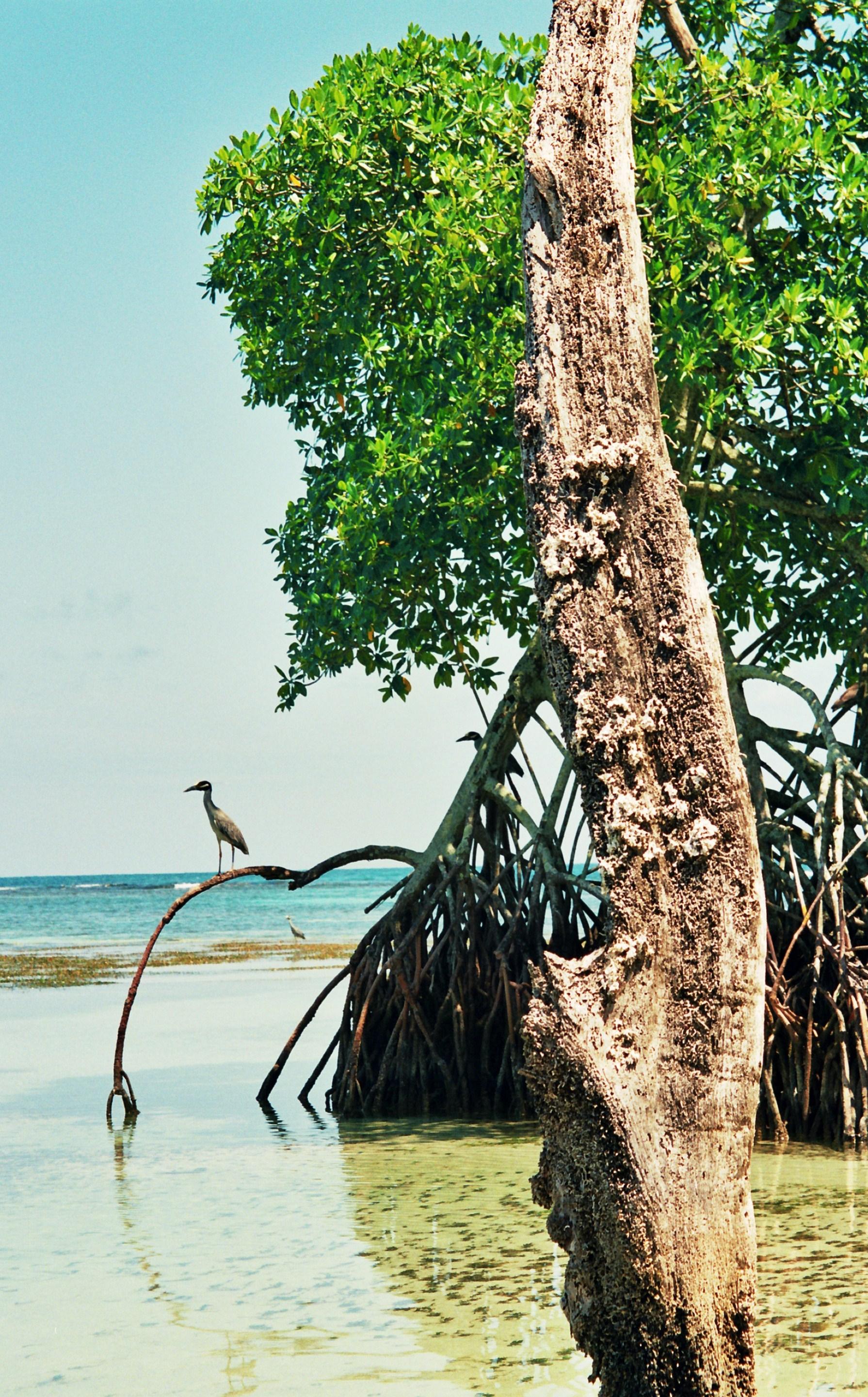 pták hlídající hnízdiště, Zapatillas