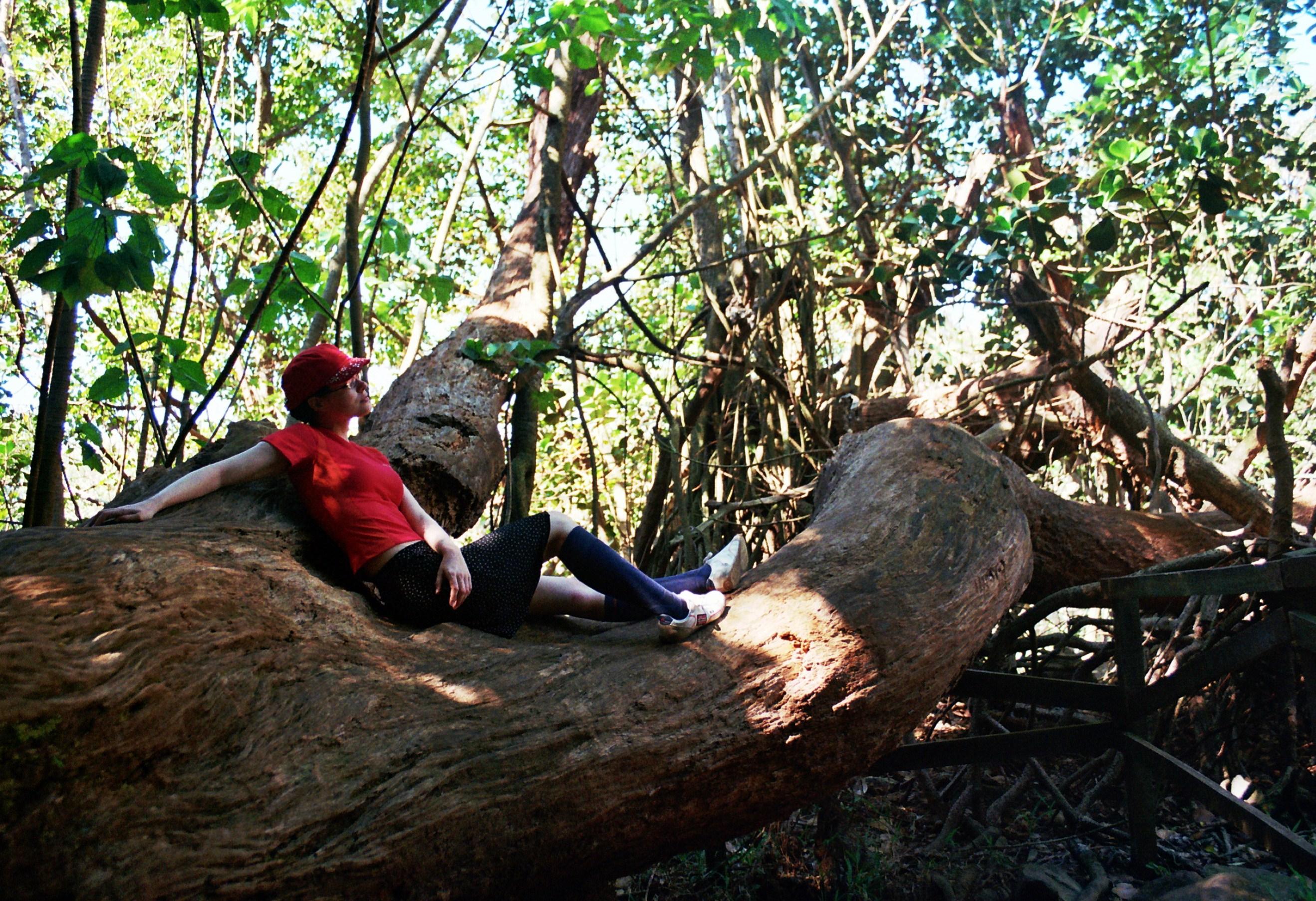 jak se sedí na stromě;)