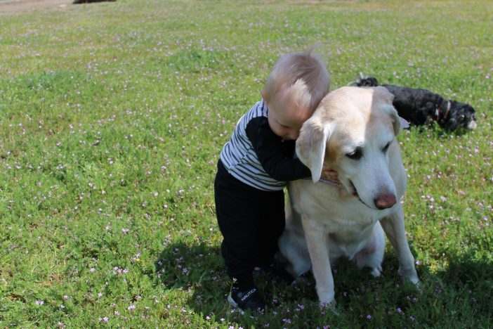 5 Ways to Prepare your Toddler for a Dog