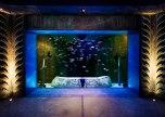 lost chamber aquarium
