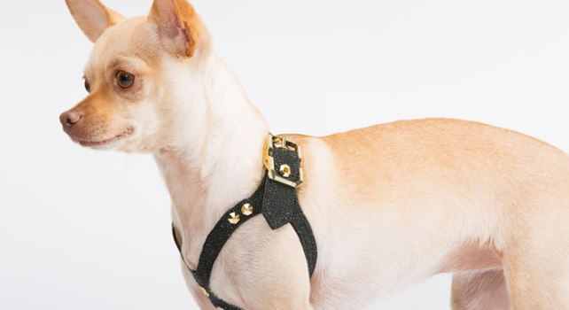 Brikk Lux Dog Harness : Un harnais pour chien incrusté de diamants