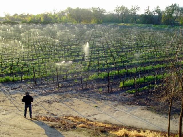 Borra Vineyards: Daring to be different in Lodi, California
