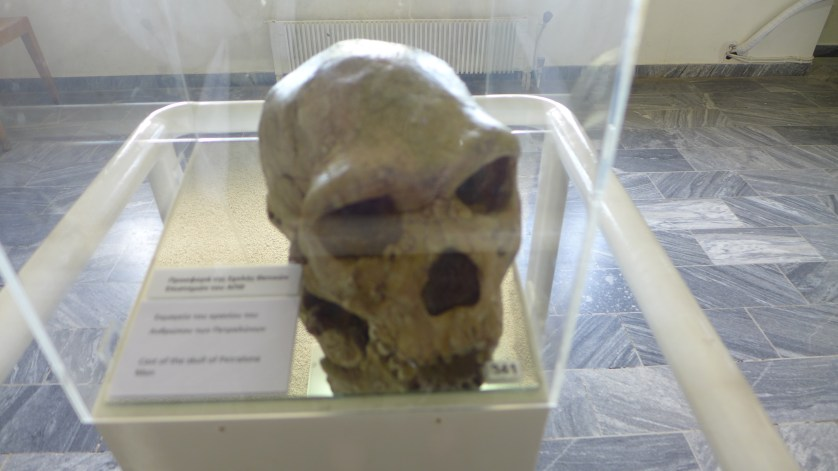 Oldest European Human Skull found to date.