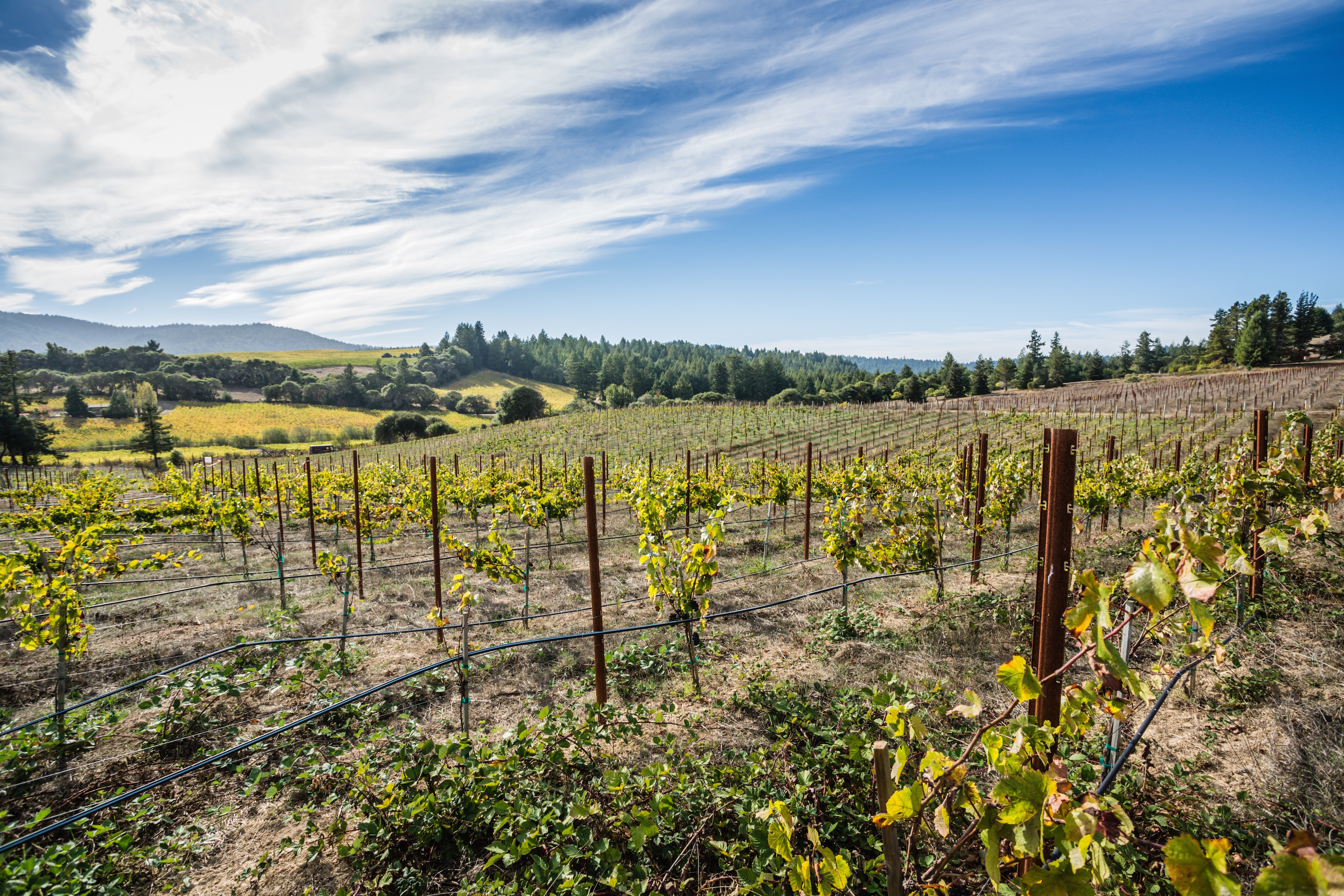 Lula Cellars vineyards & Lula Cellars Offers Exclusive Limited Production Wines