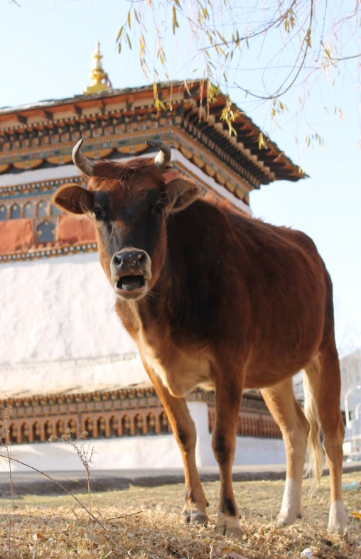 August-Paro Bhutan-Fredric Hamber (12)