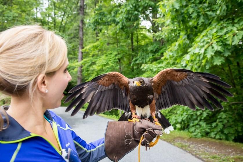 A Hawk Walk