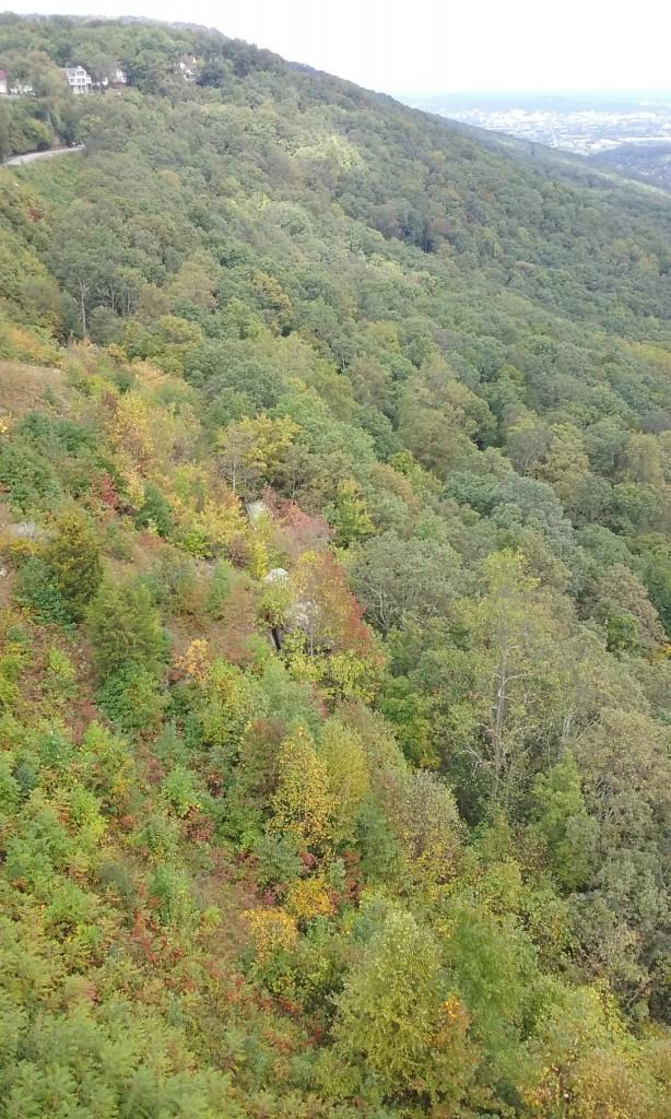 Fall Foliage on Lookout Mountain