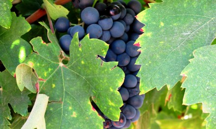 California Pinot Noir