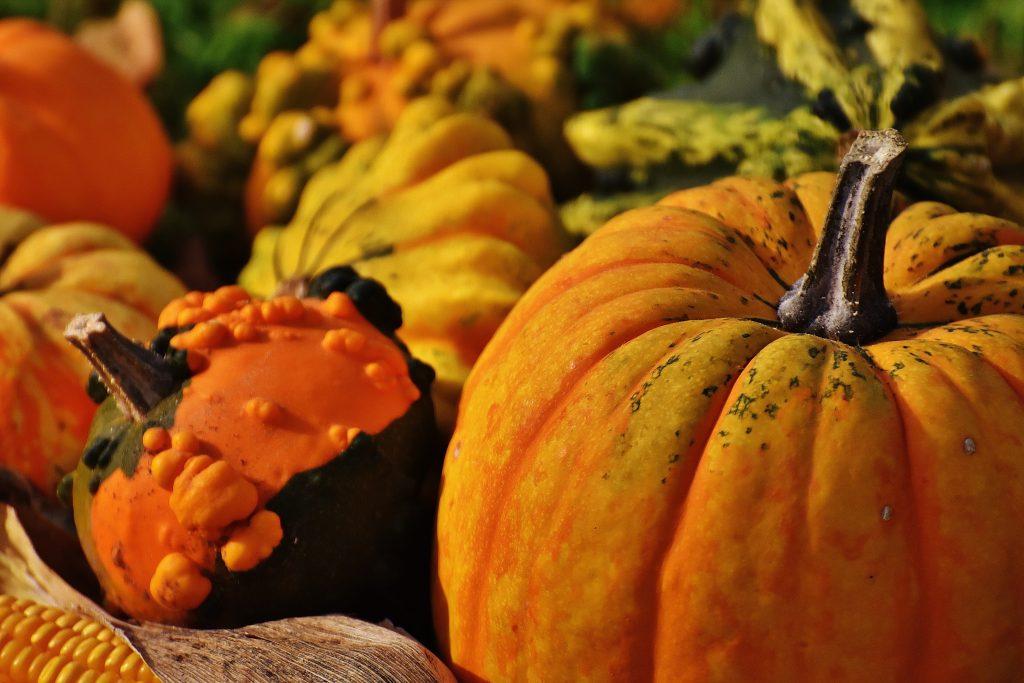 pumpkins-1708770