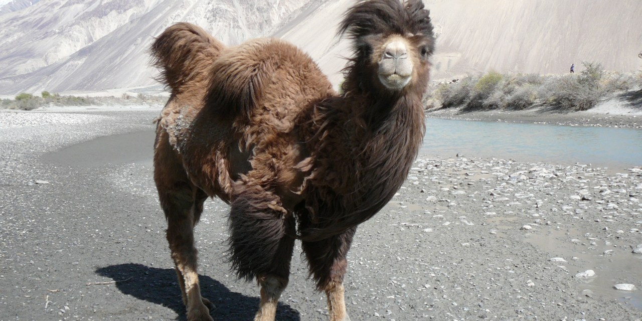 Journey Over The Pamir Highway & Fabled Frontiers