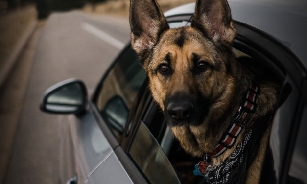 Silvercar by Audi Provides Stress-Free Travel For Dog Owners During The Holiday Season