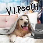 "Ovolo Hotels Introduces New ""V.I.Pooch"" Pet-Friendly Program"