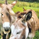 The Hidden Charm of Clifden, Ireland's Countryside