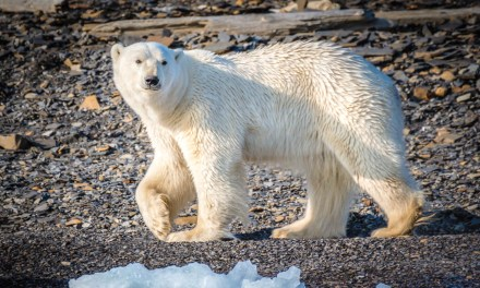 Cold Coast: Exploring Norway's Svalbard Archipelago