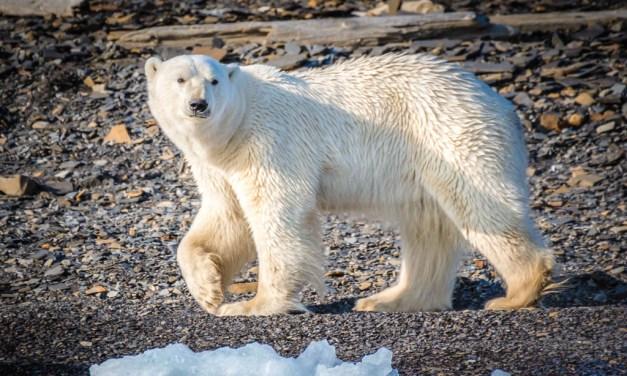 Cold Coast: Exploring Norway's Svalbard Archipelago