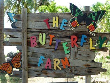 Aruba Butterfly Farm