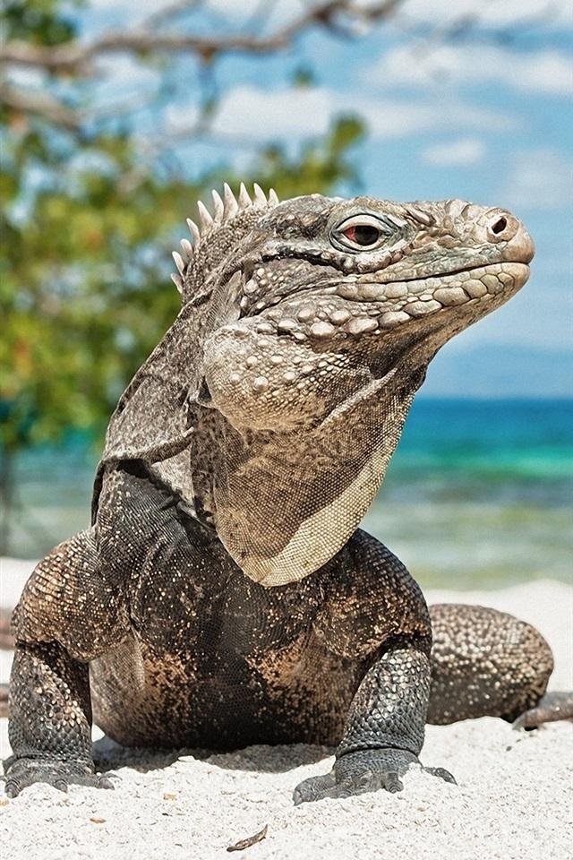 Iguana Beach Aruba