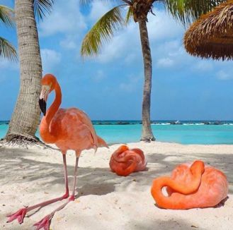 Pink Flamingo Beach in Aruba 10