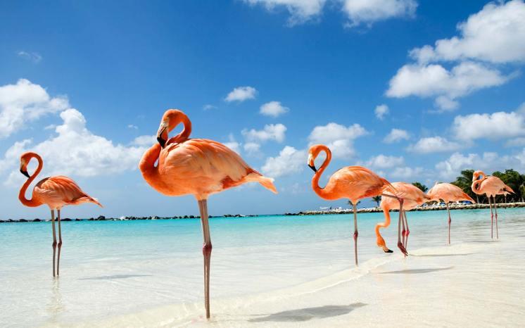 Pink Flamingo Beach in Aruba