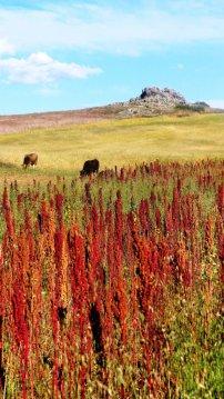 tambodelinka_quinoa_trail_landscape