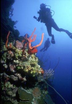 LuxeGetaways Magazine | Courtesy Caribbean Travel Association | St Kitts Snorkel