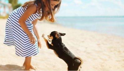 LuxeGetaways - Luxury Travel - Luxury Travel Magazine - Luxe Getaways - Luxury Lifestyle - Miami Beach - Pet Friendly Travel - Miami Beach Visitor and Convention Authority - MBVCA