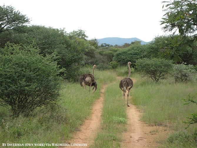 Mokolodi Nature Reserve in Botswana