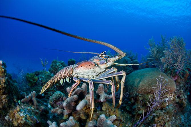 Barracuda Point A Spectacular Diving Adventure Awaits 4